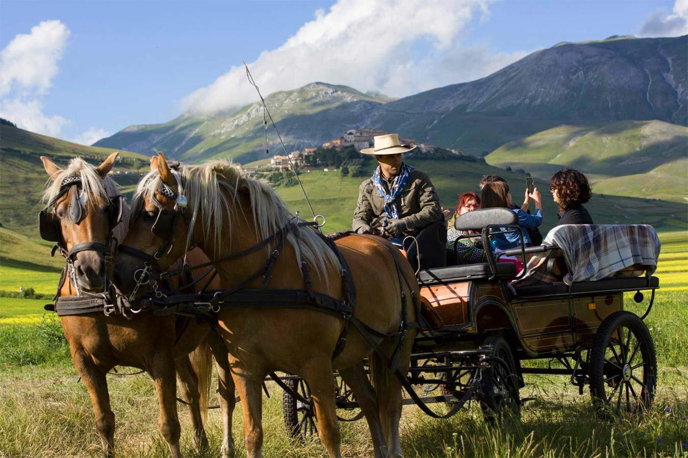 Cavalli Norcia