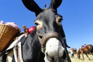 Trekking Muli